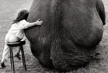 FUN ANIMALS I LOVE / by D