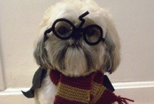 I solemnly swear that I am up to no good / Harry Potter of course! / by Allison W
