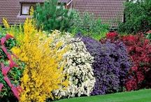 ~✿ღ✿ ~Gardening~✿ღ✿~ / by Gail Macke