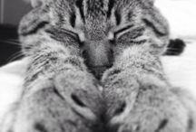 Cats !