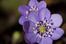 Flowers / by Alyssa Matos