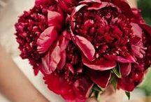 Flowers / by Kamilla Karge