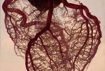Medical / by Kamilla Karge