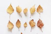 Fall in Pinterest