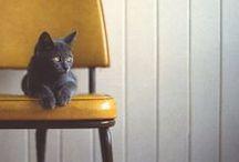 pets / by Luisa Pedroso | Jewellery Designer