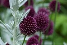 Gardening favorites / by Staci Grauman