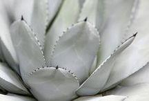 Color: White on White