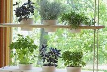 Plant Care and Gardening Ideas / Outdoor space and gardening inspiration!