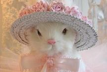 So cute ! / by Martina Fuchs