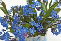 Blue Flowers / by STEMS