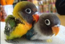 ♥ Pets & animals / Fuzz and feathers. The beauty and love of nature captured in photos.