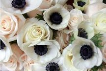 Wedding / by Jessica Fraley