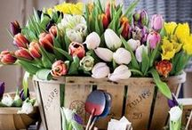 Simply Spring / Spring decor, project, DIY and Inspiration