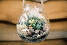 Succulents / by Diana Trotter