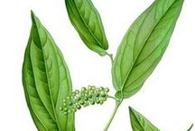 Litsée citronnée / Verveine exotique / Verveine Yunnan / Litsea cubeba. Huile essentielle, hydrolat. / Sedative, anti-inflammatory. Slightly irritant. Aldehydes mostly (geranial, neral, citral...)