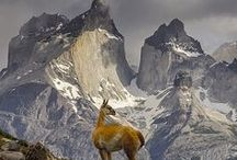 Travel AMERICA |Chile / The beauty of: Chile