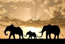 Elephants! / by Ashley Bokar
