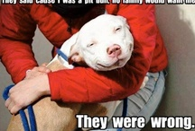 for the love of Pitt Bulls / by Diana Austin