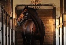 It What A Horse Be / by April J. Waldroup