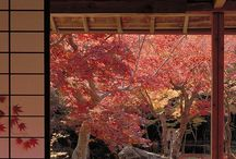 The colors of Japan / These are the pictures that inspire me that I have found about Japan.  / by Nicole Dilts
