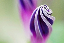Flower arrangements / by Kara Sevgi