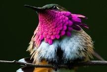 Birds / by Kara Sevgi
