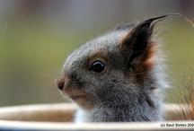 squirrel! / by Dawn Webb