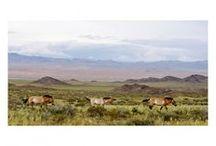 Příroda a životní prostředí / Nature and Environment / Kategorie obsahuje jednotlivé fotografie a série zachycující přírodu a životní prostředí, tj. faunu, flóru, krajinu venkovskou i městskou, problematiku ekologie.