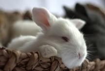 bunnies / by Sally Conklin
