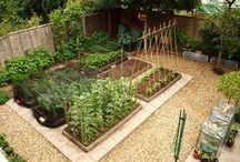 Gardening / by Becky DeNitto