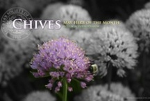 Chives / by Herb Society of America