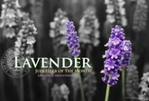 Lavender / by Herb Society of America