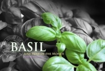 Basil / June 2013 Herb of the Month / by Herb Society of America