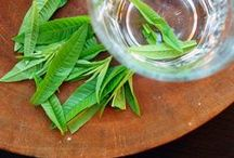 Lemon Verbena / by Herb Society of America