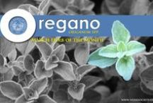 Oregano and Marjoram / by Herb Society of America