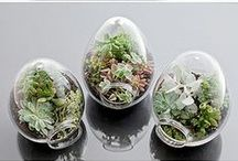 Terrariums, Pods, Planters & Containers / Habitats for all plants, cacti & succulents / by Irene Niehorster