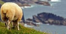 Ireland Travel / Irish-related inspirations to get you excited and inspired for your next trip to the country.