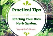 Gardening / Even though we live in an apartment, we can still have a full patio garden! I love pinning gardening inspiration, tips, and tricks!  / by Jami Balmet | Young Wife's Guide
