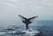 [Dreams of the Sea]