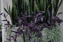 Containers / Planters / planters, containers, succulents, flowering planters, terracotta pots, lead planters, zinc planters, concrete bowls, wood planters, bespoke planters, annuals, grasses, modern planters, mid-century pots, pots