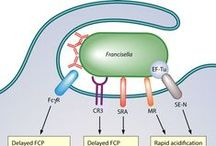 4-Immunology: Innate immunity - phagocytes / by Alfredo Corell