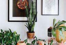 Plants/Decoration