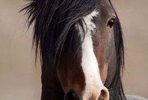 ♡ Horses ♡
