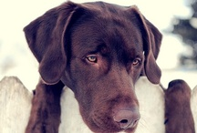 Pups / Ruby & Char Char / by Laura Cason