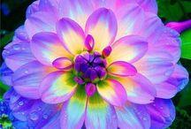 Flowers, Gardens, Window Boxes, etc. / by Erin Tafoya