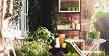 uprawy balkonowe/balcony garden / Ogródek kuchenny - uprawa ziół i warzyw na balkonie, tarasie, parapecie.