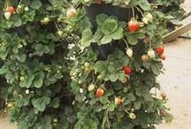 Gardening and Landscape Ideas / by Sharon Price