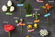 Gardening Tips / by Jennifer Trennum | edible sound bites
