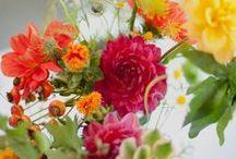 Flowers / by Nancy Noel