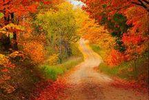 Autumn / My favorite season. October is my favorite month.